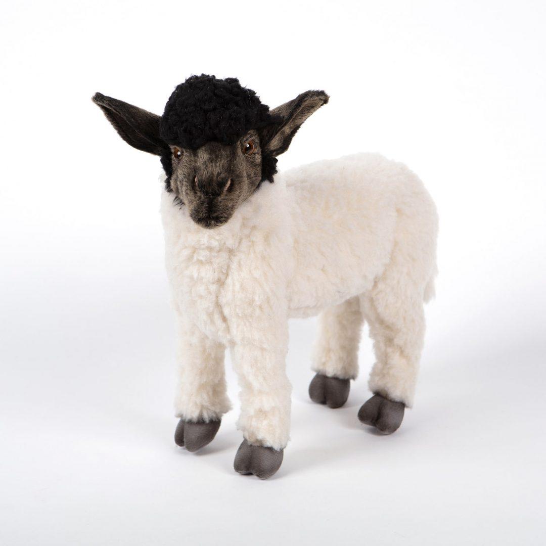 Sheep Suffolk Hansa 7822 Mary Shortle 2-min