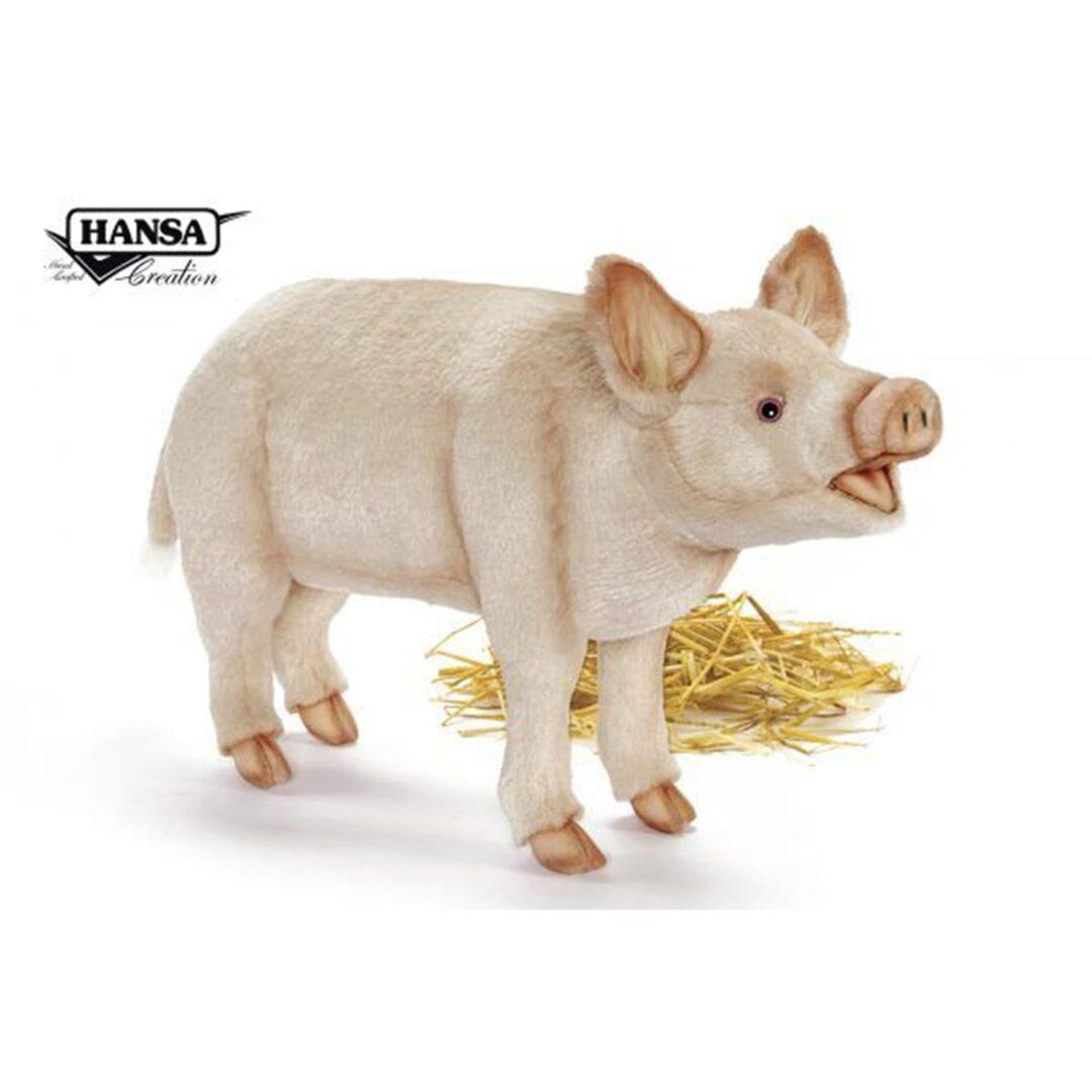 Pig Hansa-min