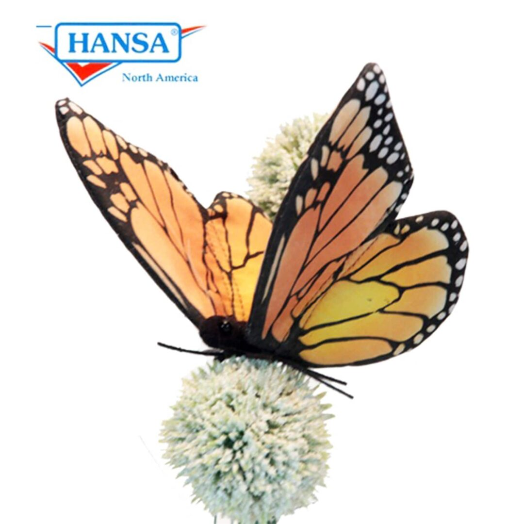 Monarch Butterfly Hansa -min