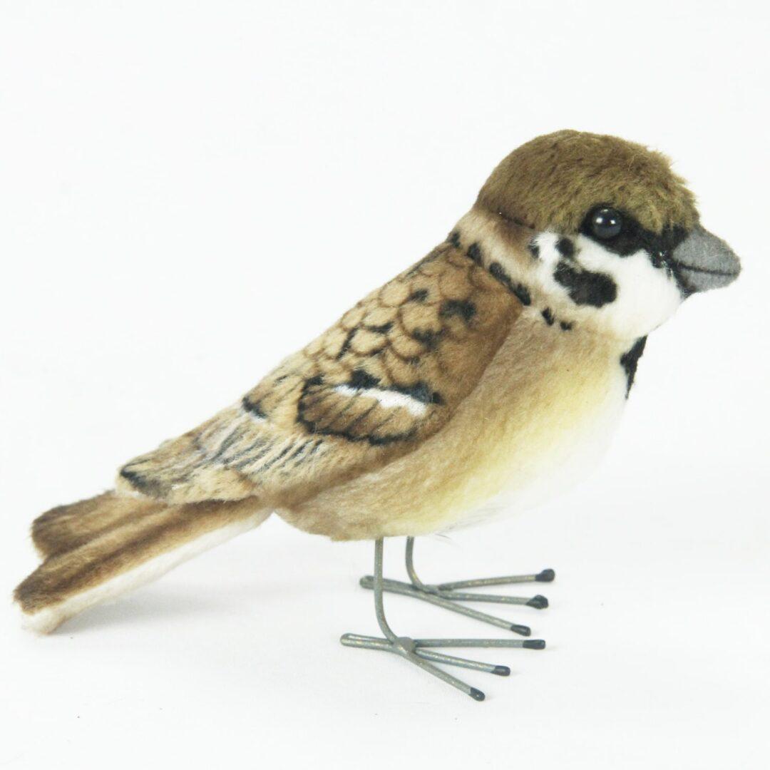 Tree Sparrow Hansa-min
