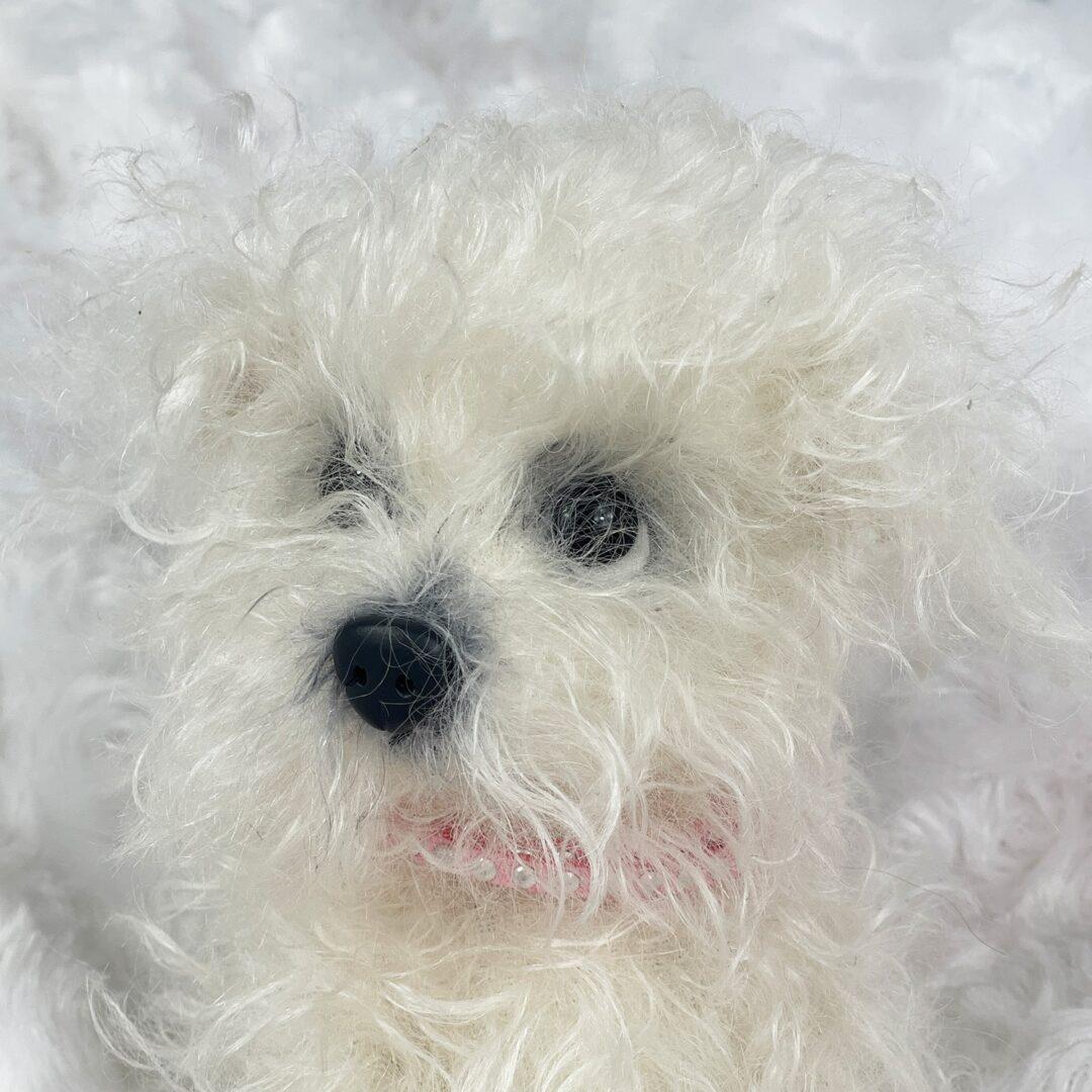 Sassy Artist Puppy 1-min