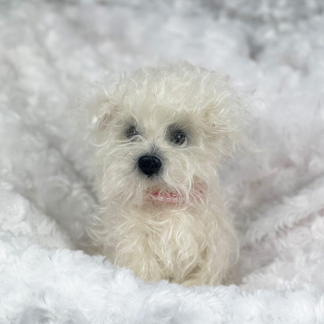 Sassy Artist Puppy-min
