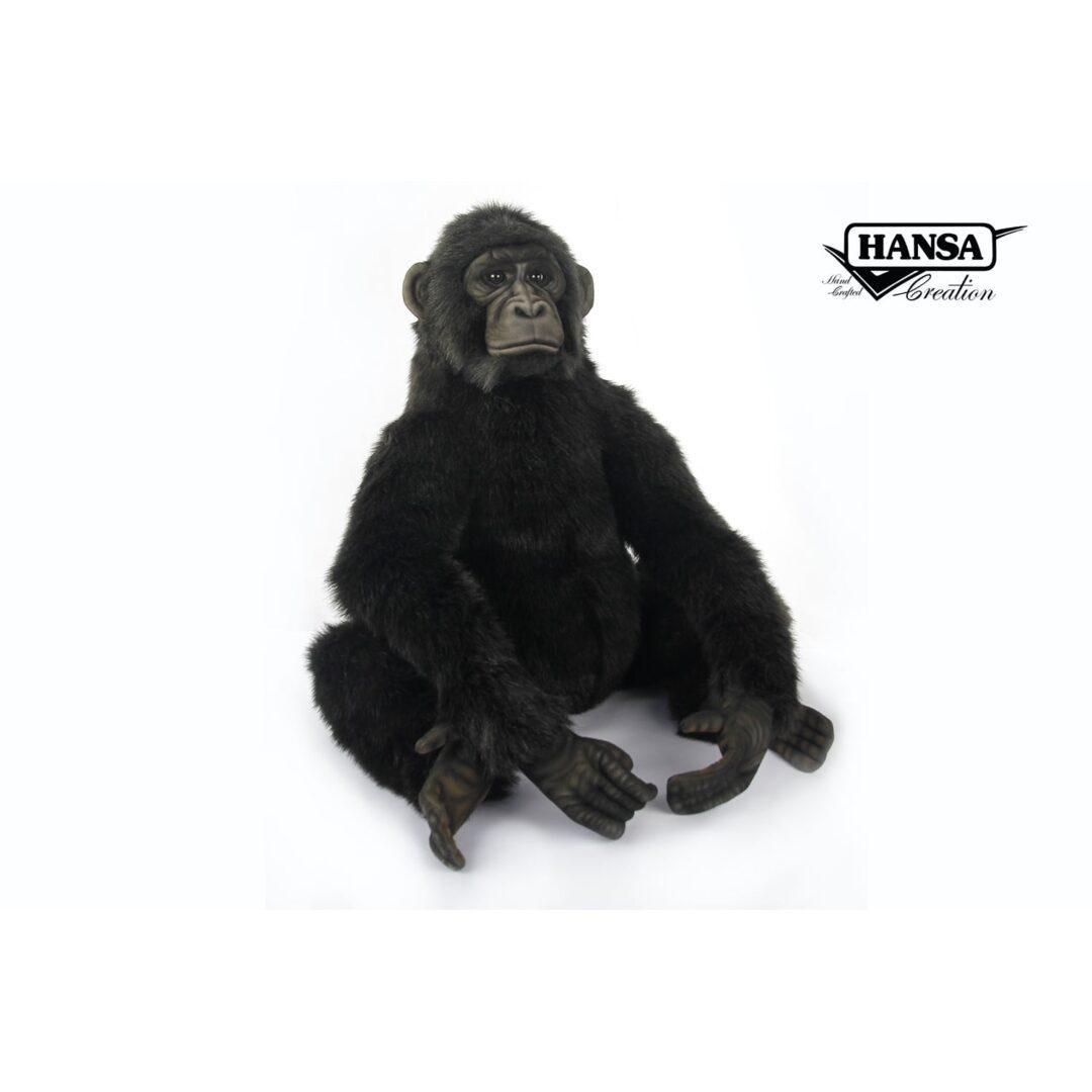 Chimpanzee Hansa-min